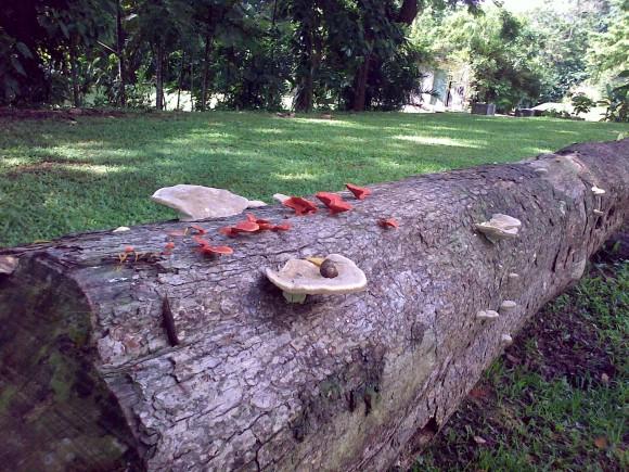 fungi ?