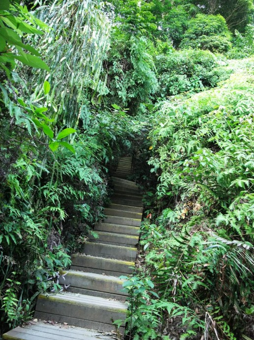 wooden steps up Dairy Farm path