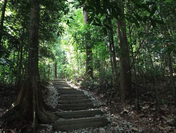 up the steps of Jungle Fall path