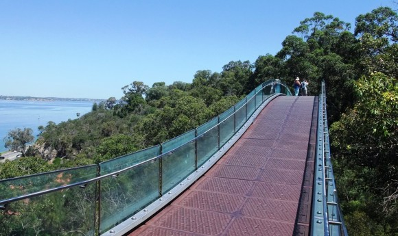 solid steel and glass treetop walk