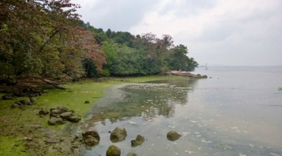 The Chek Jawa boardwalk