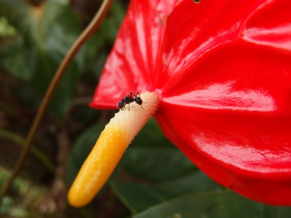 Ant on pretty flower
