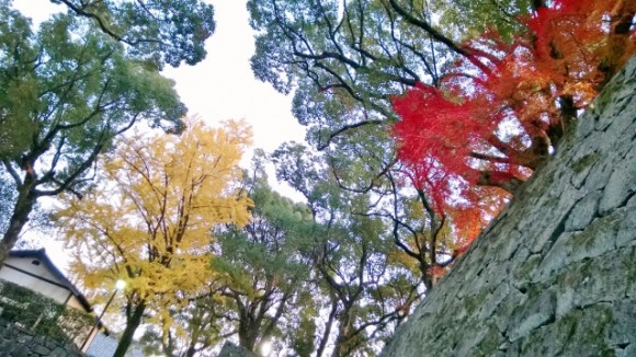 The colours of autumn provide accents to the browns and grey and black.
