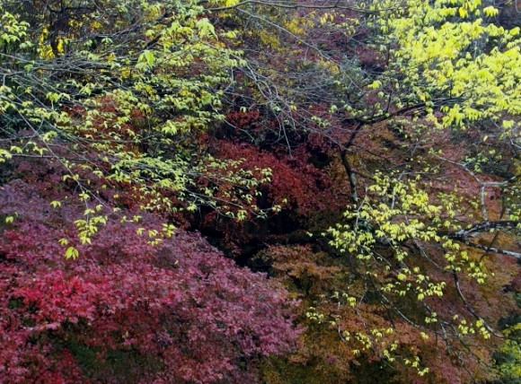 Lovely autumn foliage along the slopes and cliffs