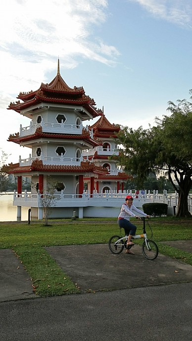 Tern in front of the twin pagoda
