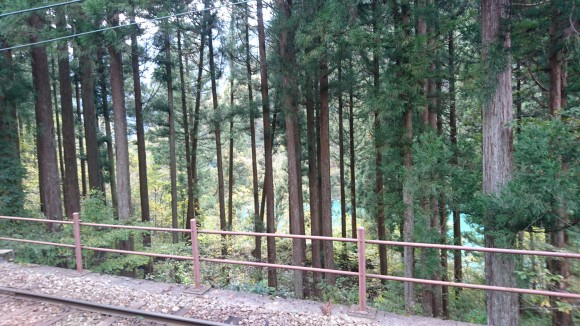 Pine trees along the train tracks (Credits: Judith)